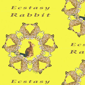 Rabbit Ecstacy