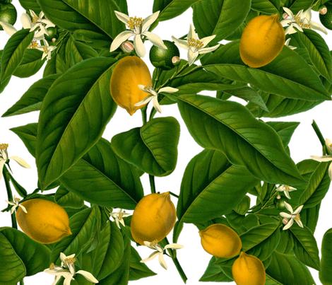 Lemon Botanical wallpaper - peacoquettedesigns - Spoonflower