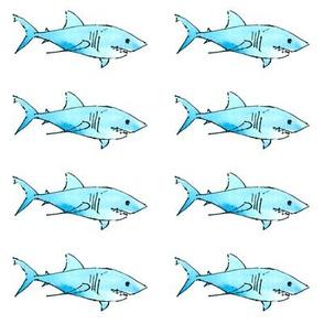 Shark shark shark!