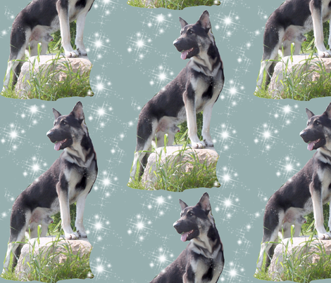Silver German shepherd