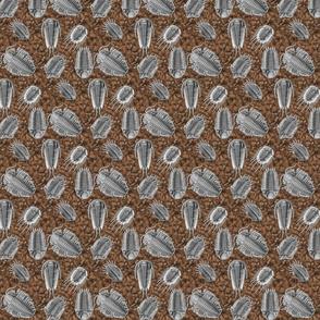 trilobites_brn