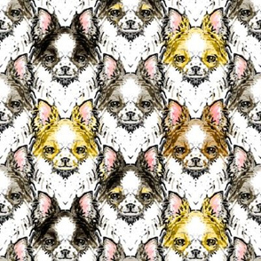 Long-Haired Chihuahua, Assorted