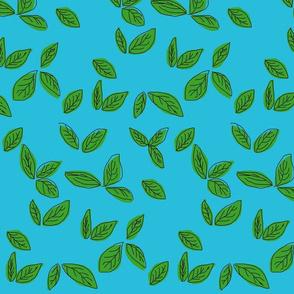 Citrus Leaves