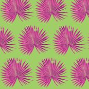 saw palmetto green