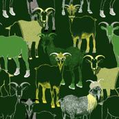 Rrhipster_goats_shop_thumb