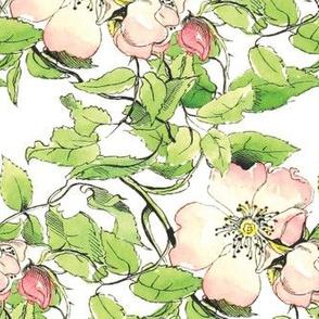 Wild Rose 1836 Var No. I