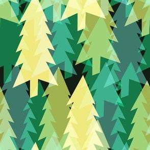 Minnesota Pine Trees