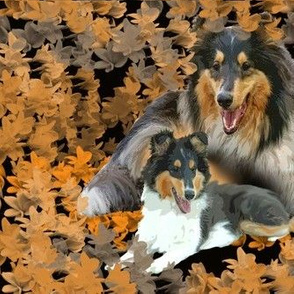 Collies and leaves