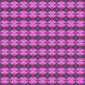 Desert Rose Cactus