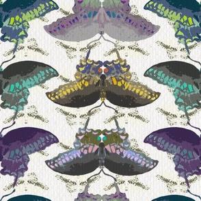 Entomologist's Dream Butterflies