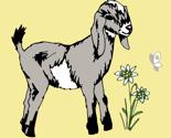 Rrrbaby_goat_thumb