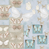 The_Butterfly_Studies