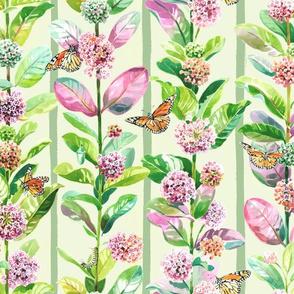 Milkweed & Monarchs