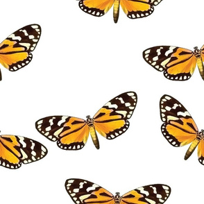 Botanical Butterflies, Orange Moths