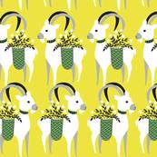 Rwhite_goats_shop_thumb