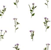 Pressed Purple Flowers