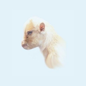 Miniature Baby Goat Head on Blue Background