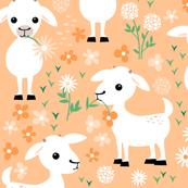 Baby goats on blush