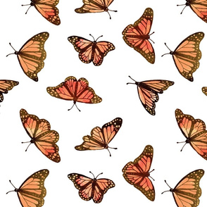 Monarch butterfly pastel on white background