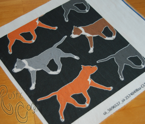 Trotting American Staffordshire Terriers large border B