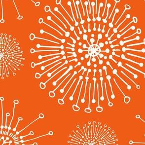 dandelions_orange_wh-01