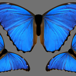 Oversized Blue Morpho Butterfly
