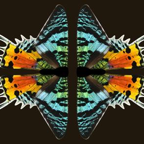 Sunset Moth Medium One Piece