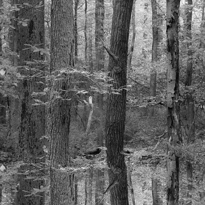 Forest For The Trees ~ Black and White