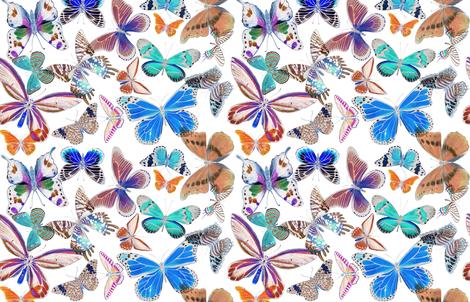 Butterfly Bounty Colorized