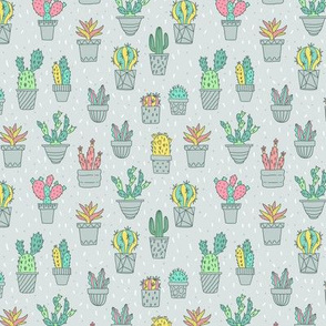 cacti color pattern