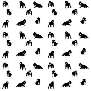 Dog_Collection