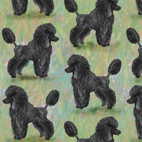 Black Poodle on Pastels
