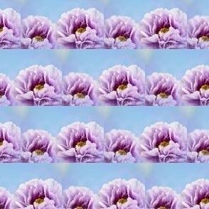 Violet Peony Flower