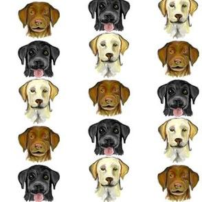 Labrador Colors