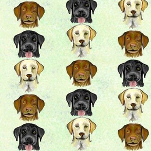 Labrador Colors 2