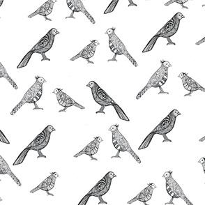Little Birds Everywhere!!