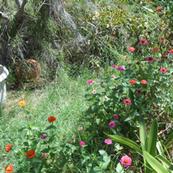 The Garden Fairy's Hidden Treasures (Ref. 0355b)
