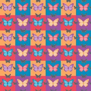 ButterflyCoordinatesPreview