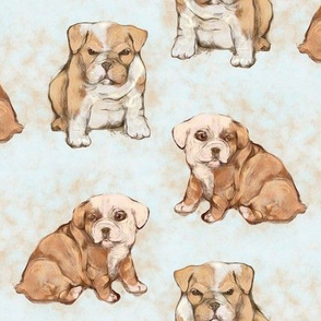 Grumpy and Shy Bulldog Pups