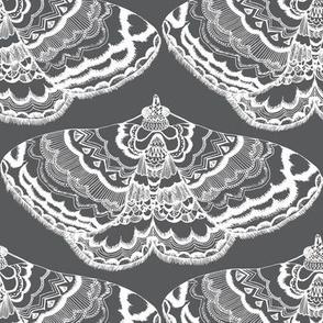 Grey Lace Flutterings
