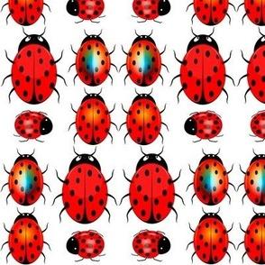 Ladybugs_Ladybirds