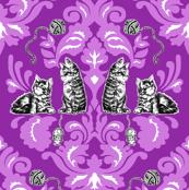 kitten_purple