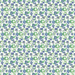 Blueberries-white