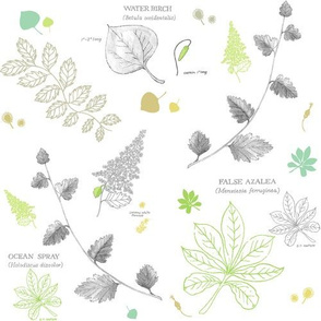 Rrwitty_botanical_1-01_shop_thumb