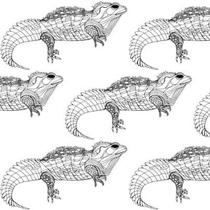 Tuatara Monochrome