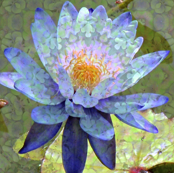 Blue Water Lily 4068-ed