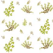 Green Floral Botanical