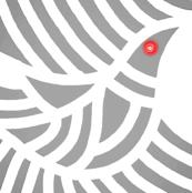 Grey Dove Red Eye