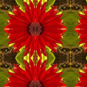 Gerbera Red