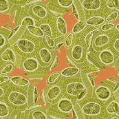 olive orange algae